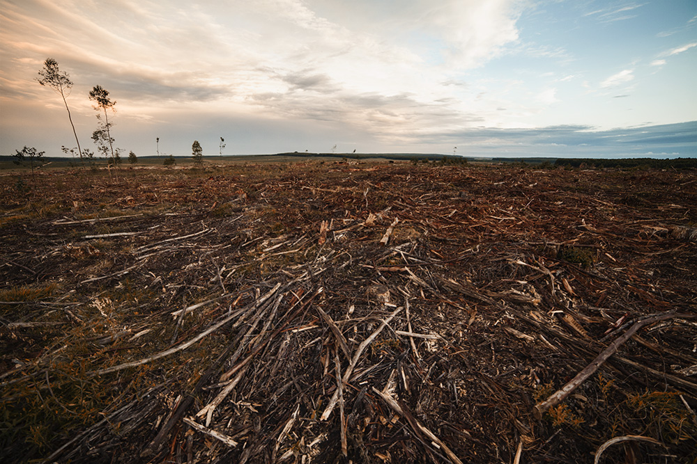Nachhaltig in Holz investieren.