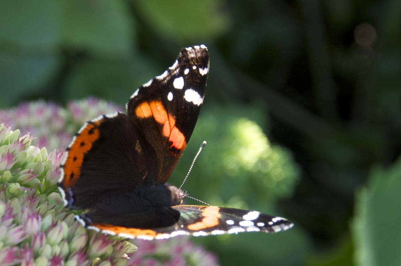 Nachmittags im Garten