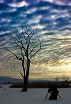 Nachmittagsbaum