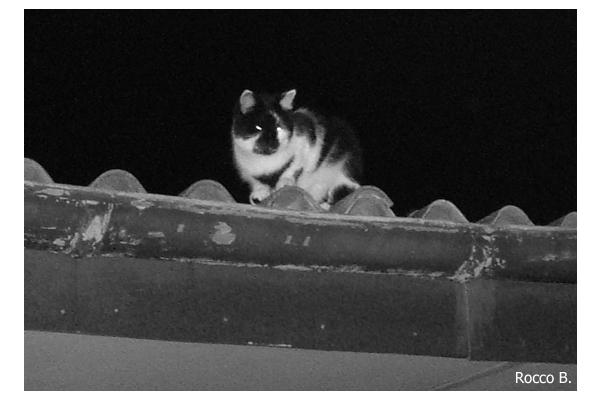 Nacht der Katze