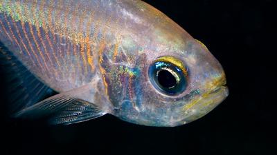 Nacht-Fisch