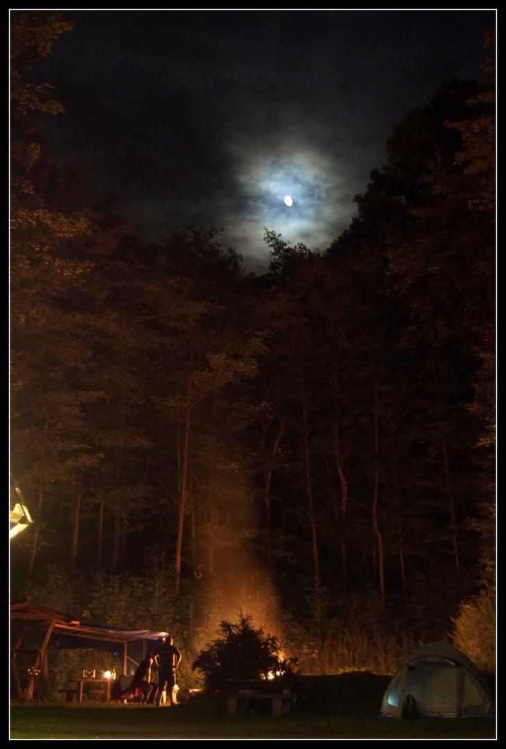 Nacht im Wald.