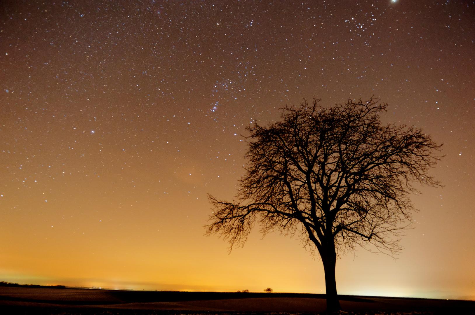 Nacht in der Pfalz 1