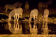 Nacht in Namutoni