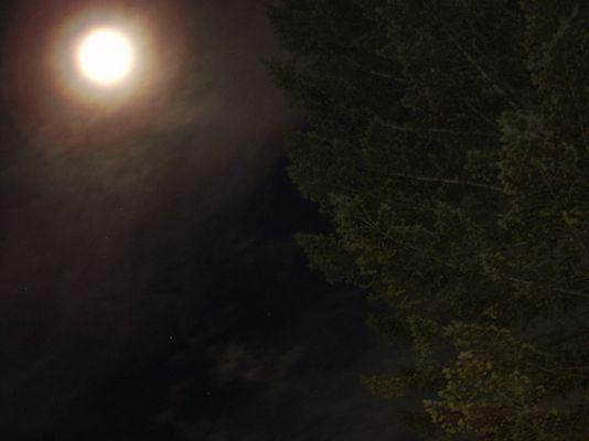 Nachtaufnahme mit Mond