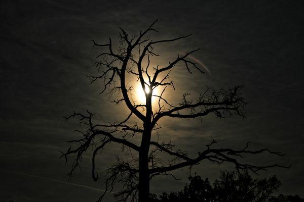 Nachtgewächs