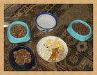 Nachtmahlzeit für herrenlose Katzen + Igel,