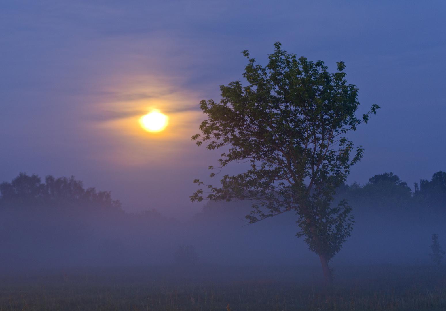 Nachtnebel