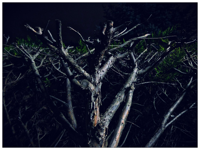 Nachtpflanzen