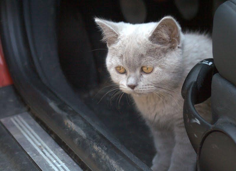 Nachtrag zu Wilde Katzen