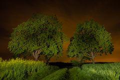 Nachts im Maifeld