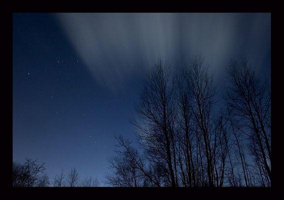 Nachts im Wald_2