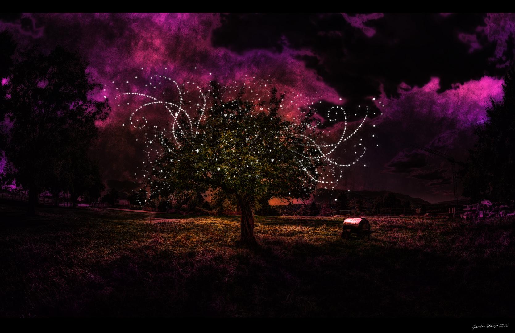 Nachts kommen die Leuchtwürmchen...