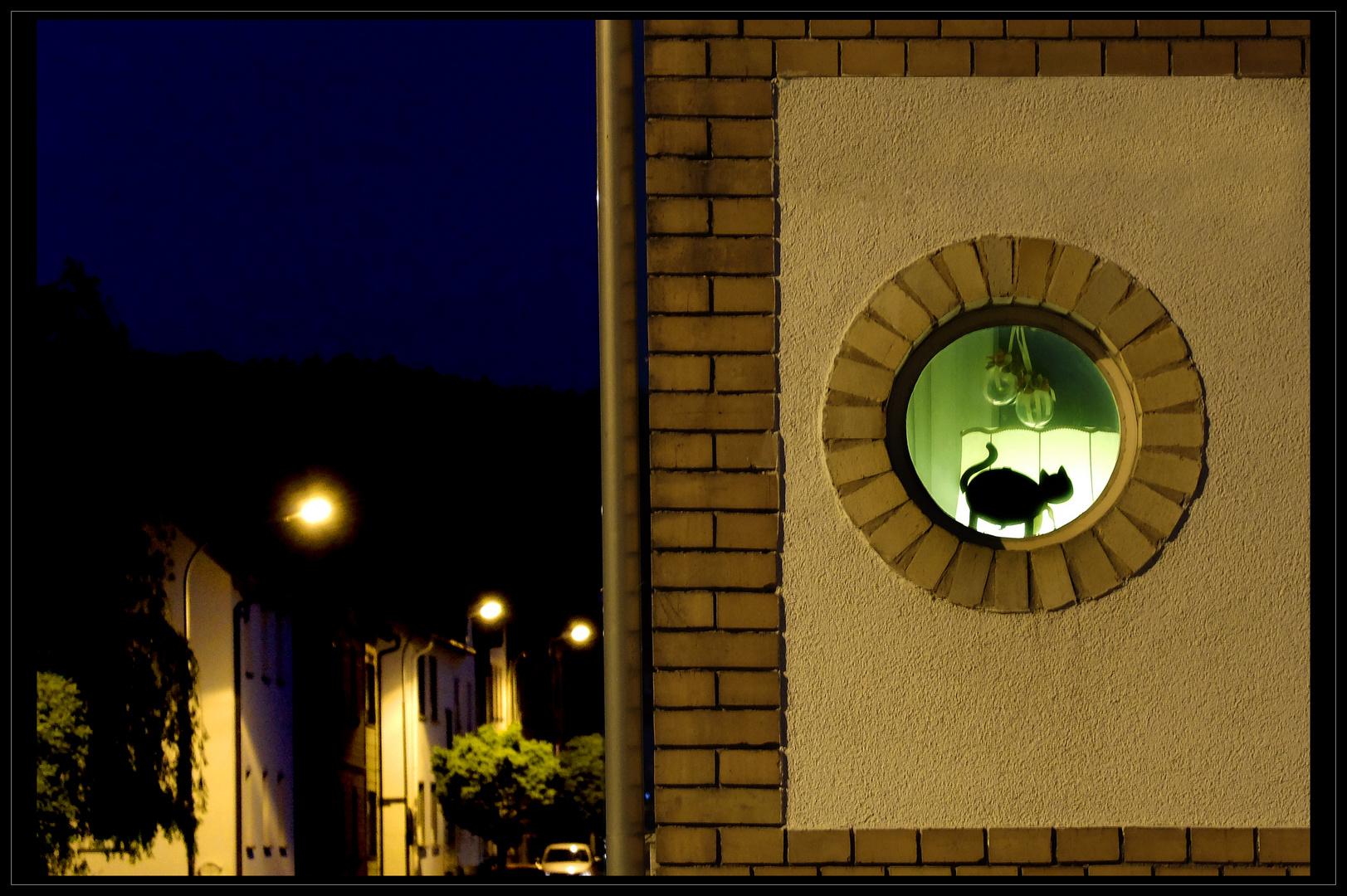 Nachts sind alle Katzen...