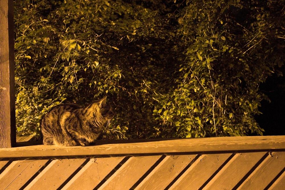 Nachts sind alle Katzen grau?