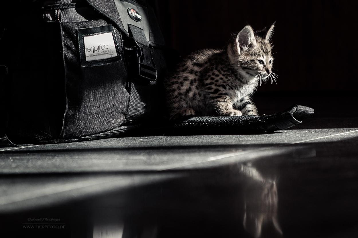Nachts sind alle Katzen grau...