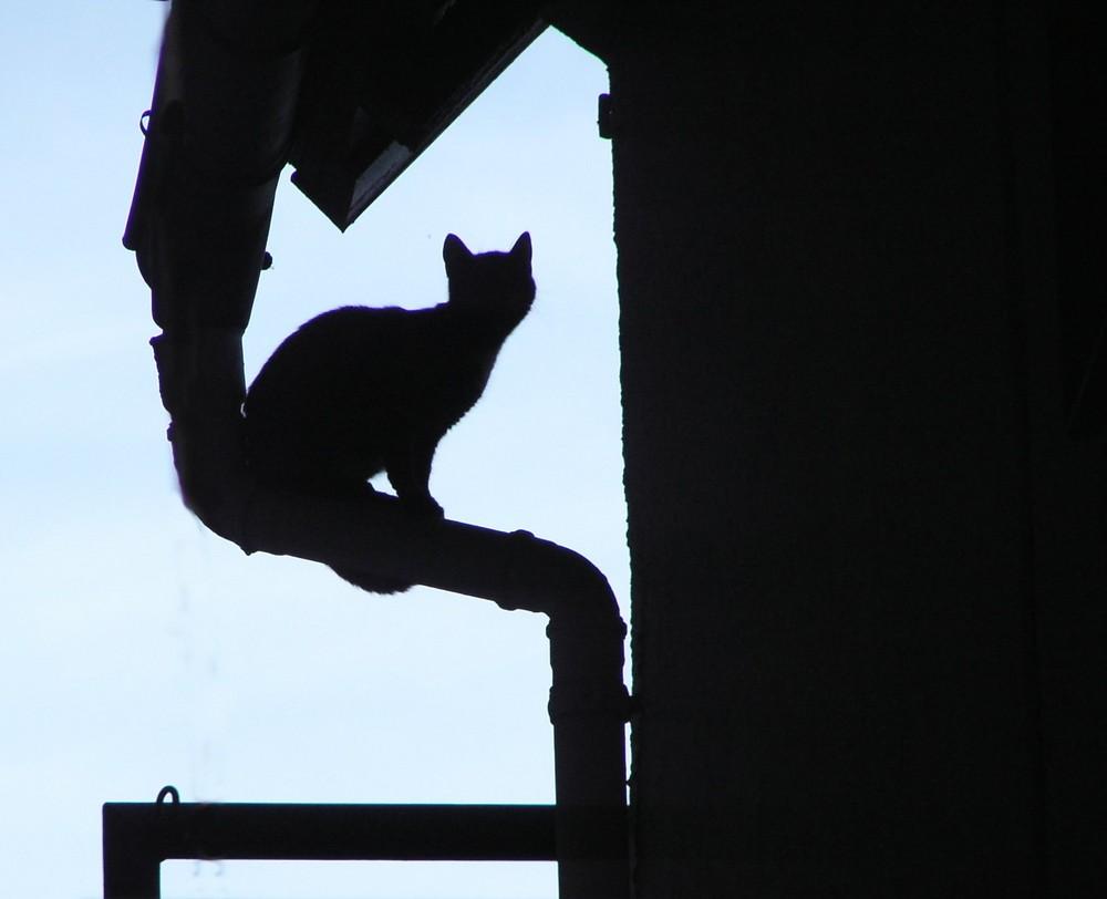 nachts sind alle Katzen grau (oder schwarz)