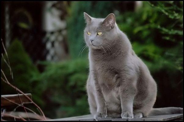 nachts sind alle Katzen grau... (reload)