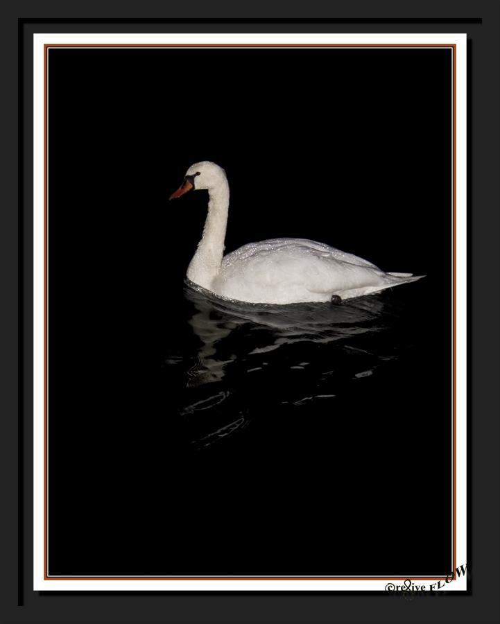 NachtSchwan mit Perlen