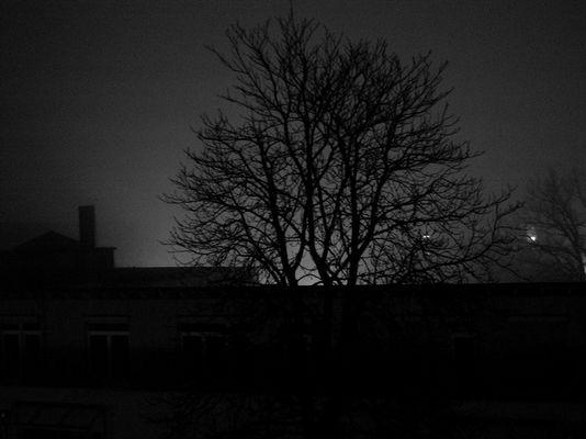Nacht_Sicht