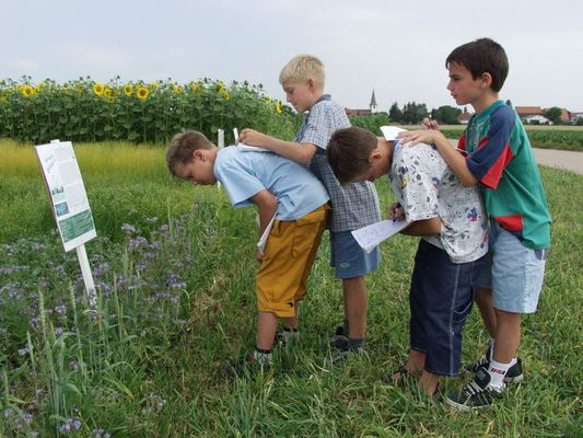 Nachwachsende Rohstoffe - Unterricht im Feld