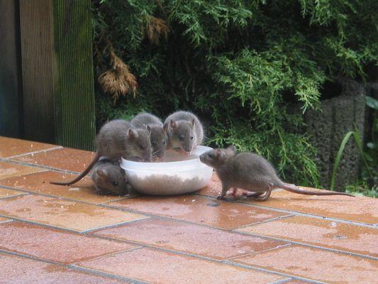 Nachwuchs bei Familie Ratz