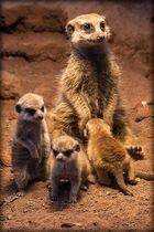 Nachwuchs im Erfurter Zoo 21.03.2014