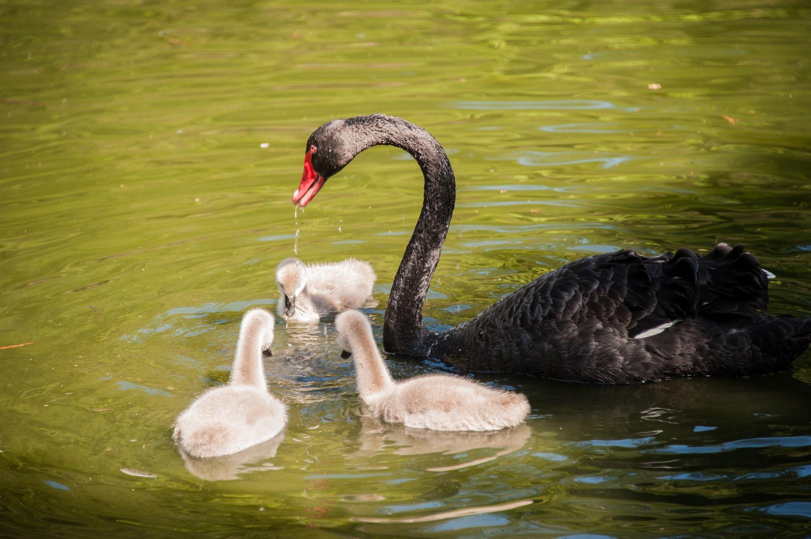 Nachwuchs im Vogelpark