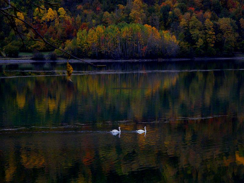 Nadando juntos en el lago pintado