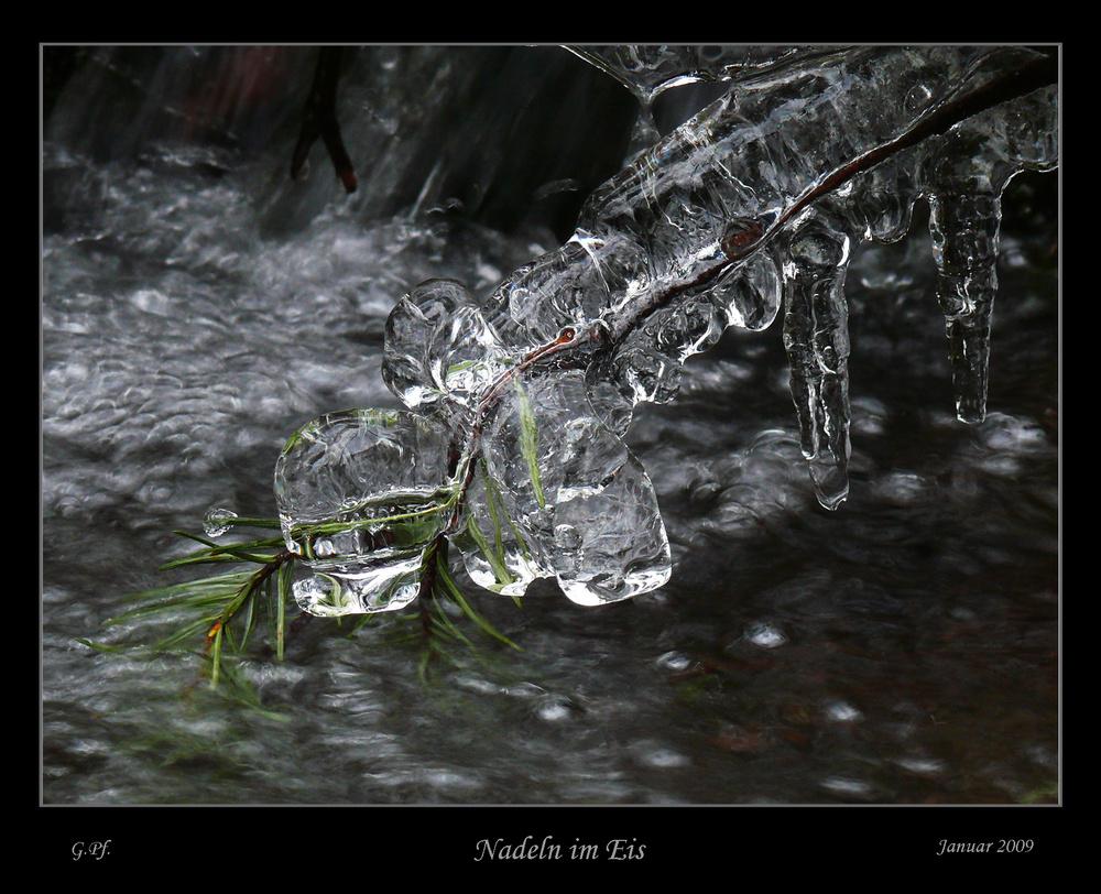 Nadeln im Eis
