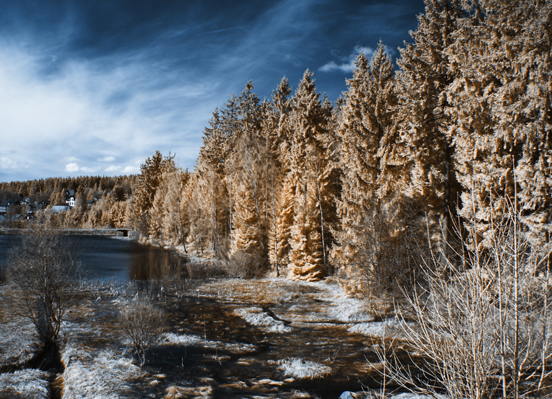 Nadelwald und Wasser