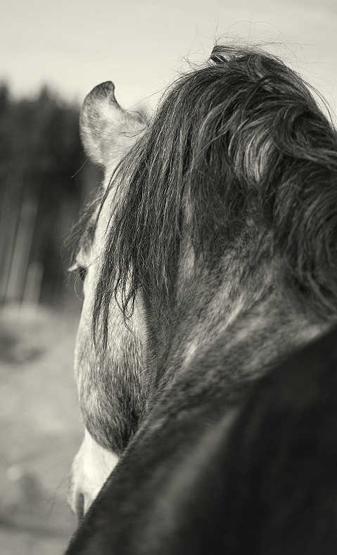 Nadin, wieder mein Seelenpferd