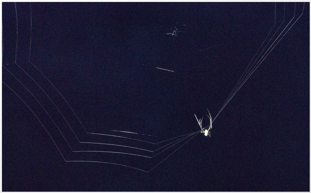 Nächtliche Spinnenaktivität