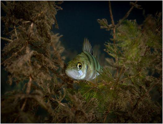 Nächtliches Nest