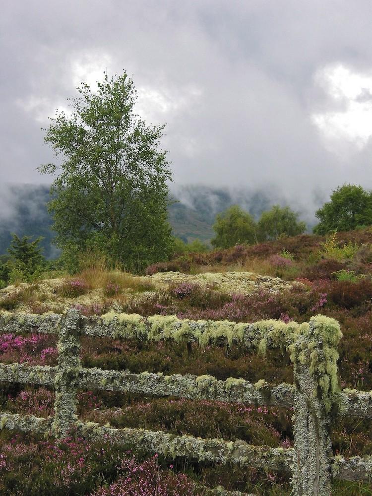 Nähe Drumnadrochit (Loch Ness)