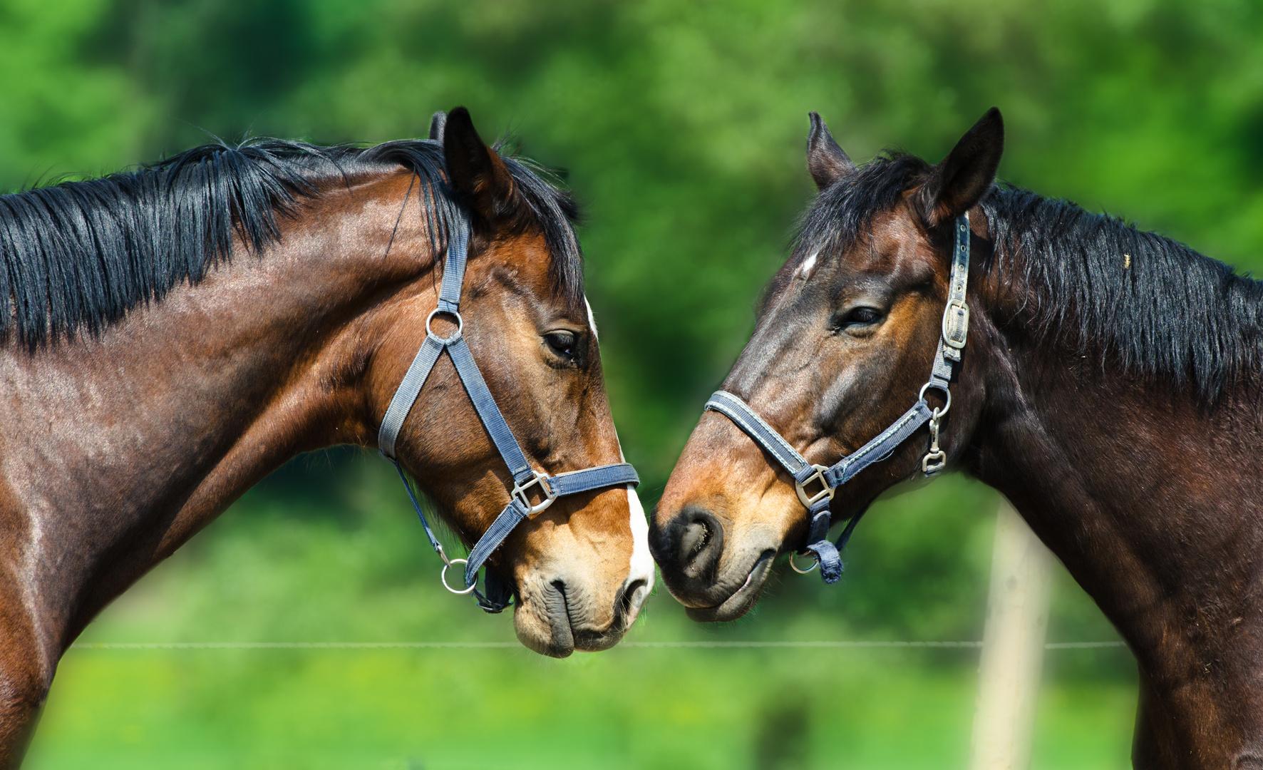 Nähe - zwei die sich mögen