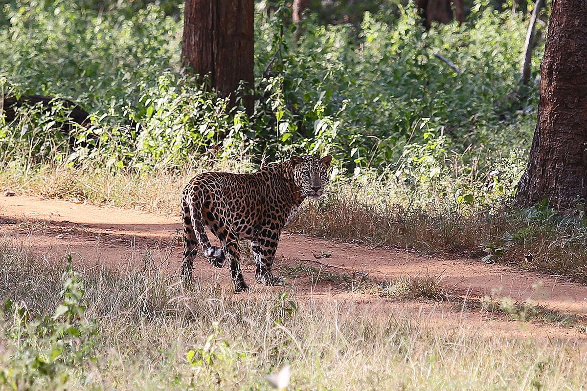 Nagarhole Nationalpark, Indien, Karnataka, #3