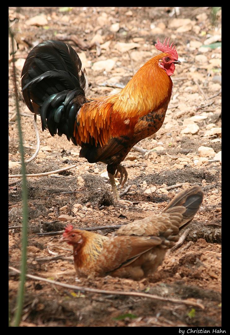 nah Chick