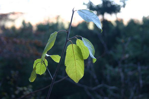 Nahaufnahme eines ganz jungen Baumes