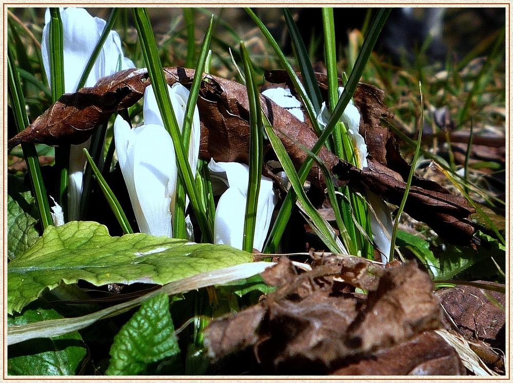 naissance du printemps à travers l'automne.