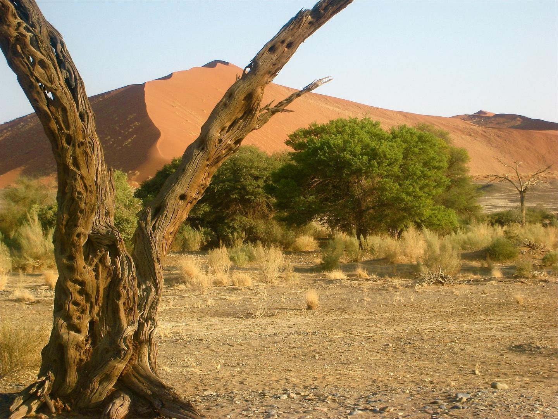 Namib Pflichtfoto