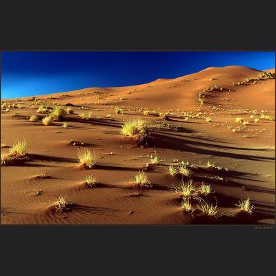 Namib Sand