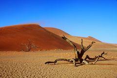 Namib - Sossusvlei