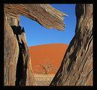 Namib View