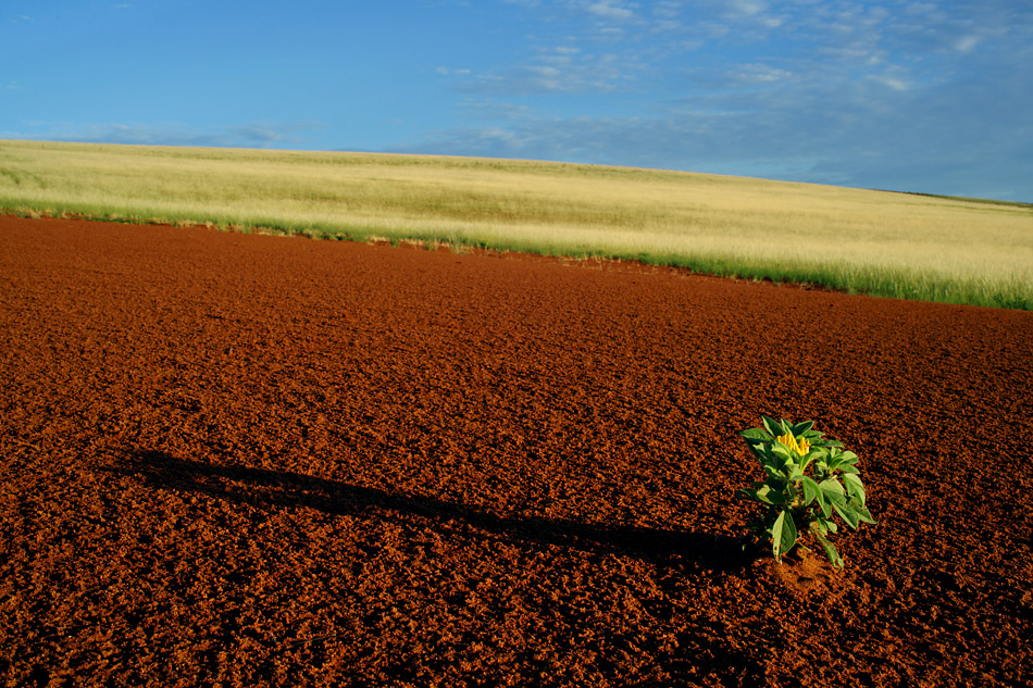 Namibia 2011 – Starke Regenfälle oder blühende Wüste