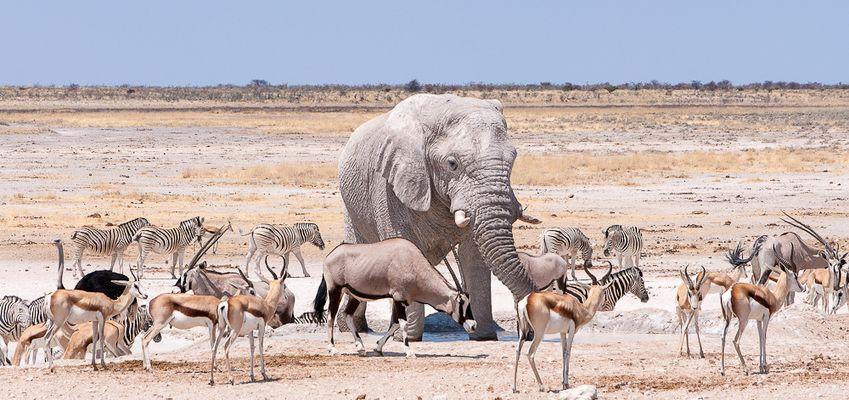 Namibia 2012: Wasserloch Etosha