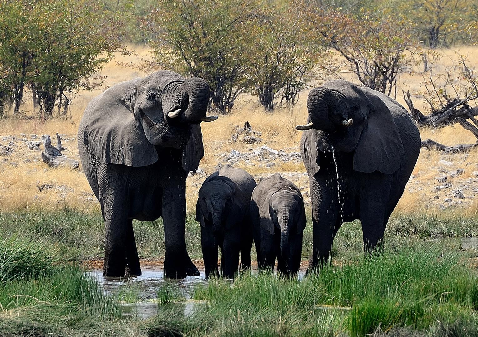 Namibia - Familienglück