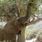 NAMIBIA im Ganamub