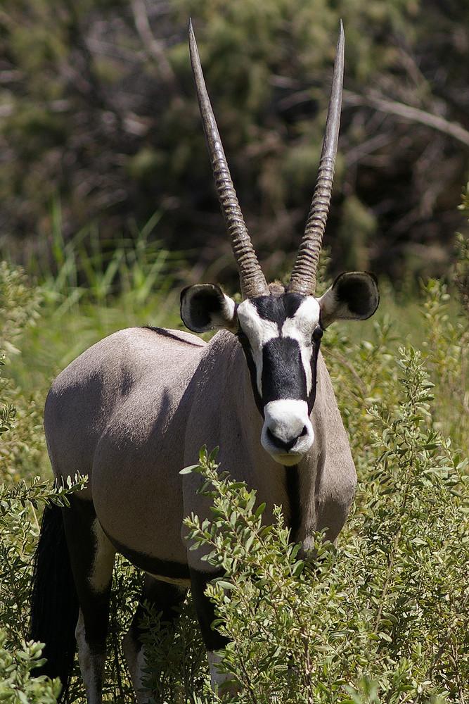 NAMIBIA im Hoarusib