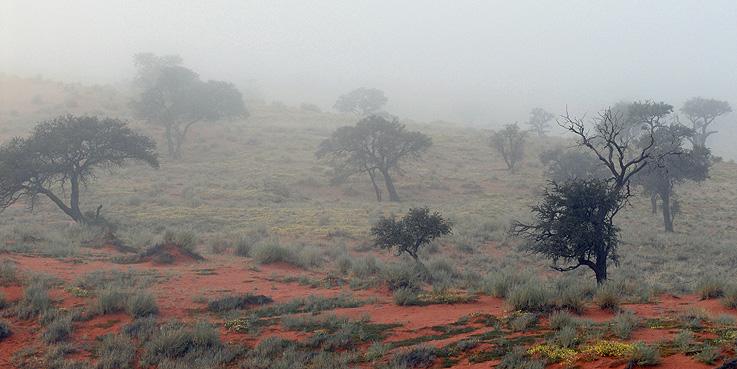 Namibia-Landschaft im Nebel